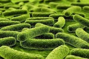 Microbacterium of tuberculosis