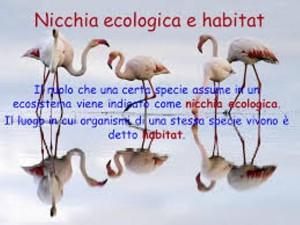 Ecologocal niche
