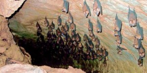 Bats in Mount Elgon Caves