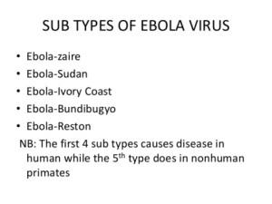ebola-hemorrhagic-fever-300x225