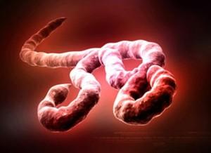 emerging viruses: Ebola Virus